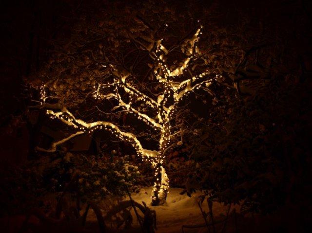 sepia xmas lights